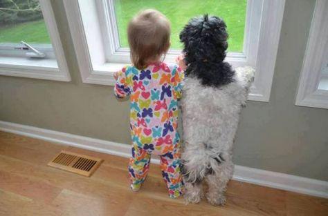 awebic-criancas-animais-2