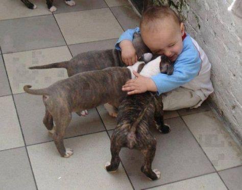 benefícios animais de estimação